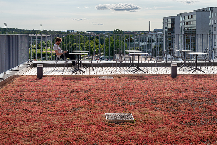Jokaisesta kerroksesta on pääsy maksaruohon peittämille terasseille.